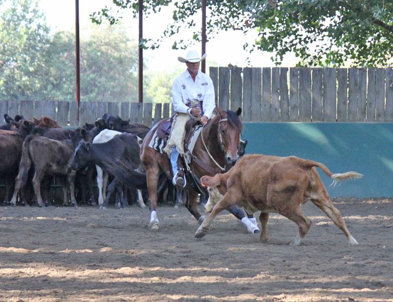 ranch cutting horse