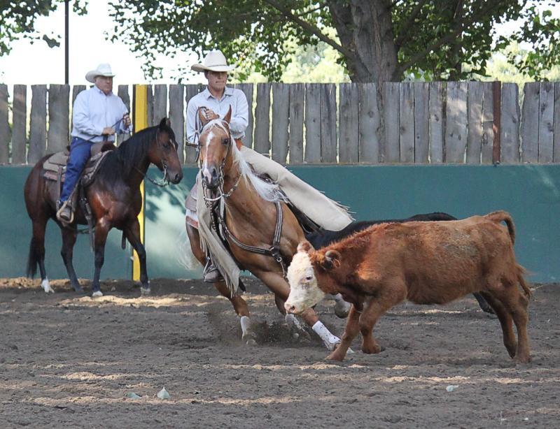 palomino cutting horse