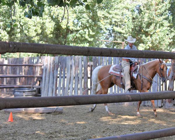 horse draggin a log