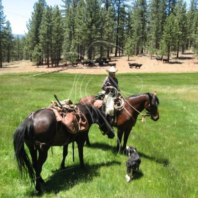 Cowgirl with pack horse in a meadow - Theresa Sheridan Designs