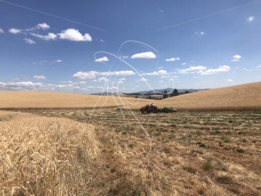 Baling hay - Theresa Sheridan Designs