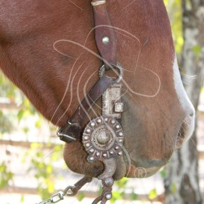 Bridle bit closeup on red roan horse - Theresa Sheridan Designs