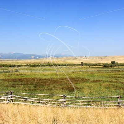 Cattle pasture at Grant-Kohr Ranch, Montana - Theresa Sheridan Designs
