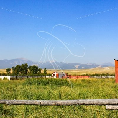 Cattle pasture at Grant-Kohrs Ranch, Montana - Theresa Sheridan Designs
