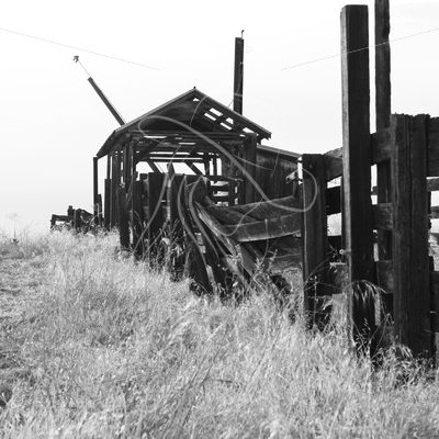 Cattle scale and alley, black and white - Theresa Sheridan Designs