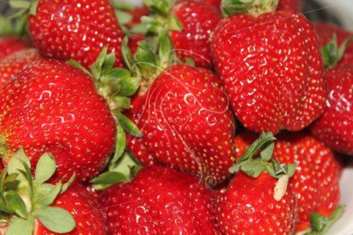 Closeup of strawberries - Theresa Sheridan Designs