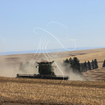 Combine harvesting beans in Idaho - Theresa Sheridan Designs