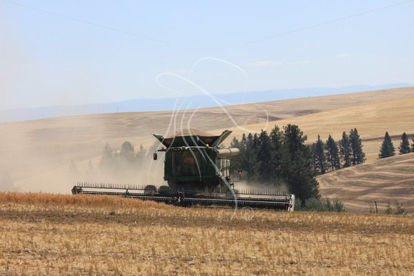Combine harvesting garbanzo beans - Theresa Sheridan Designs