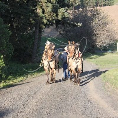 Driving the workhorses up the hill - Theresa Sheridan Designs