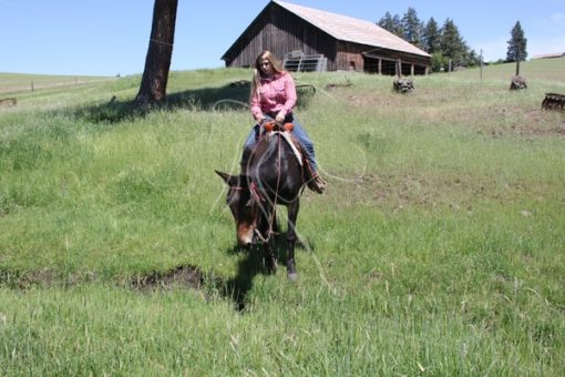 Girl riding bay mule down into a creek - Theresa Sheridan Designs