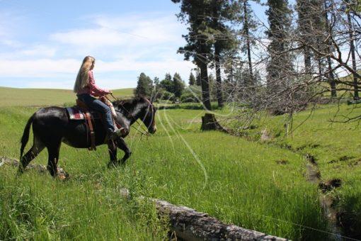 Girl riding bay mule over a log - Theresa Sheridan Designs