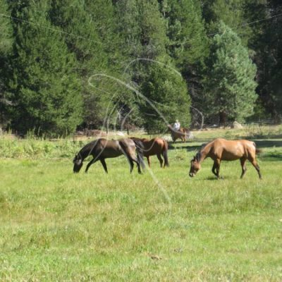 Horses grazing in a mountain meadow - Theresa Sheridan Designs
