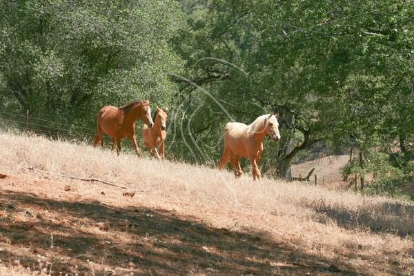 Mares turned out to pasture - Theresa Sheridan Designs