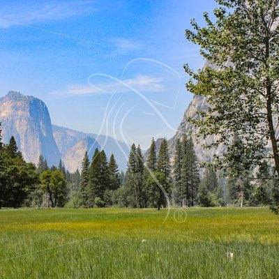 Meadow scene at Yosemite National Park - Theresa Sheridan Designs