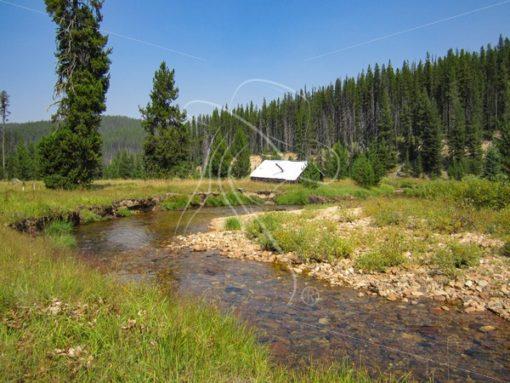 Old cow camp on Meadow Creek, Red River, Idaho - Theresa Sheridan Designs