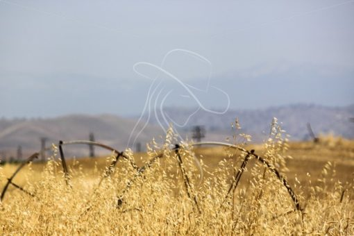 Old wheel line in a field - Theresa Sheridan Designs