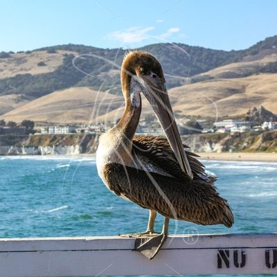 Pelican sitting on a pier on the California coast - Theresa Sheridan Designs