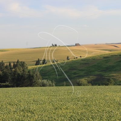 Rolling farm fields in the Palouse - Theresa Sheridan Designs