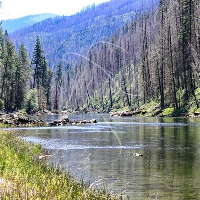Selway River, Idaho - Theresa Sheridan Designs