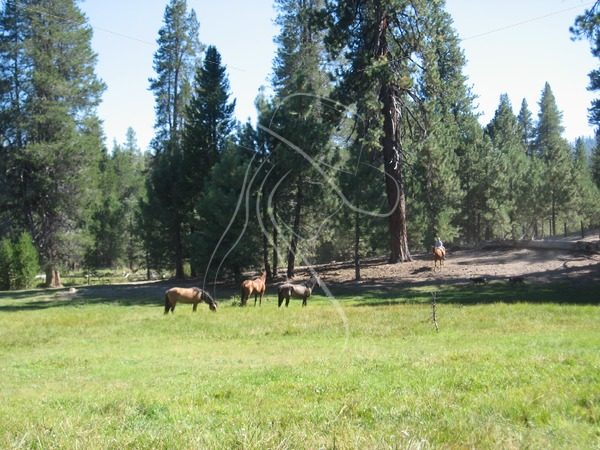 Three horses grazing in meadow with girl riding bareback in background - Theresa Sheridan Designs