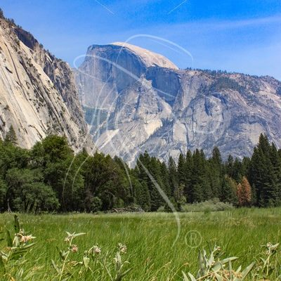 Vertical shot of Half Dome across Yosemite Valley meadow - Theresa Sheridan Designs