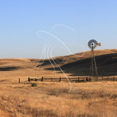 Windmill in cattle pasture - Theresa Sheridan Designs
