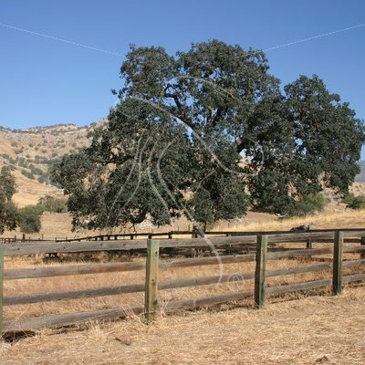 Wood fencing with oak trees - Theresa Sheridan Designs