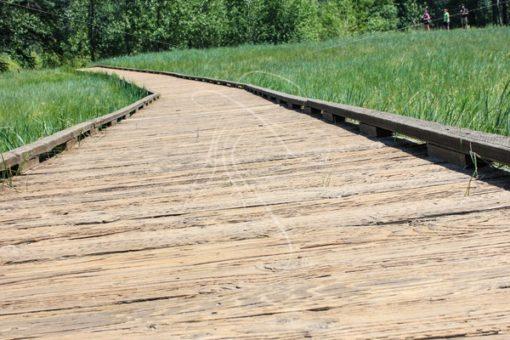 Wood sidewalk through a meadow - Theresa Sheridan Designs