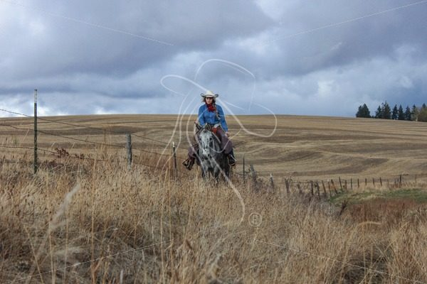 Cowgirl riding fenceline on her mule - Theresa Sheridan Designs