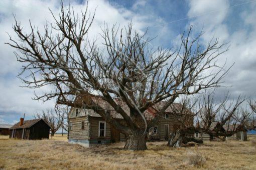 Rustic abandoned log cabin - Theresa Sheridan Designs