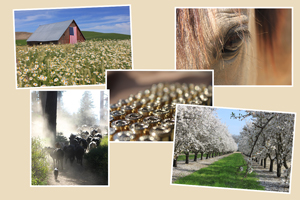 Agriculture and equestrian stock photos