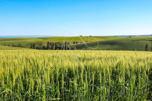 Idaho Palouse farmland - Cowgirl Media