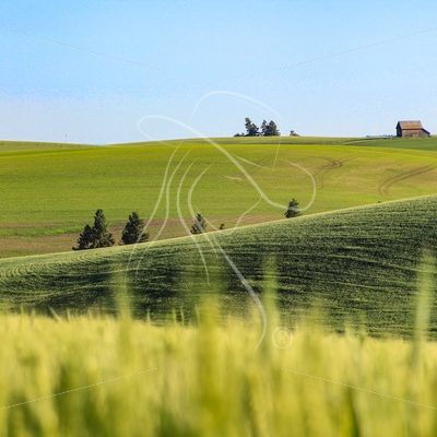 Rolling farmland in Idaho - Cowgirl Media
