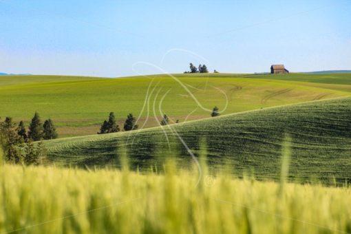 Rolling farmland in Idaho - Cowgirl Media