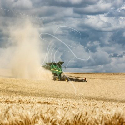 Wheat Harvest 2019 - Cowgirl Media