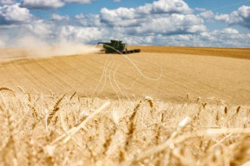 Wheat Harvest 2019 - Cowgirl Media